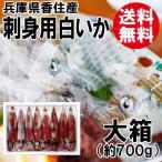 送料無料 香住産・刺身用白いか[大箱](4~8杯入)[剣先イカ/ケンサキイカ]