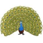 おもちゃ フィギュア サファリ製フィギュア クジャク レプリカ インドクジャク 孔雀