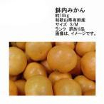 送料無料 予約 11月末以降発送 有田産 鉢内みかん 和歌山県産 約10kg 訳あり品 サイズS/M