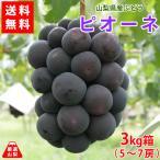 ぶどう ピオーネ 山梨県産 送料無料 農家直送 種なしブドウ 高級品種 ピオーネ3kg箱 (5〜7房)