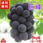 送料無料 山梨県産ぶどう 巨峰 4kg箱 種なし葡萄の王様 一番人気の定番品種 産地直送