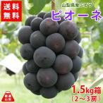 送料無料 山梨県産ぶどう ピオーネ 1.5kg箱 種なし葡萄 最高級品種 産地直送