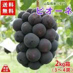 送料無料 山梨県産ぶどう ピオーネ 2kg箱 種なし葡萄 最高級品種 産地直送