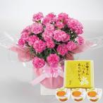 母の日 ギフト ピンクカーネーション鉢植えとまるごとみかんゼリーのセット 送料無料 お届け期間5月6日〜10日 フラワー 花 スイーツ