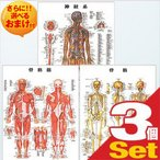 医道の日本社 人体解剖学チャート骨格筋 ポスター 3枚セット(骨格筋・骨格・神経図) パネルなし+さらに選べるおまけ付