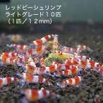 【今週のおすすめ】レッドビーシュリンプ ライトグレード(10匹/12mm前後)