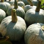 【9月下旬から発送】無農薬北海道産雪化粧かぼちゃ10kgホクホクした優しい味【送料無料】