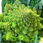 shun-choku_mae401