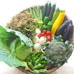 夏野菜セット/北海道産、お取り寄せ・ギフト可、ホワイトオニオン・青春きゃべつ・オクラなど