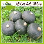 坊ちゃん かぼちゃ(250〜300g)×10玉 北海道産 南瓜 出荷時期:9〜10月