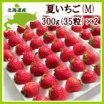 夏いちご M(300g・35粒前後)×2トレー(計600g)北海道産 夏イチゴ 出荷期間:6〜12月