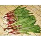 行者ニンニク(天然・50g)×20束 /北海道産/出荷時期:5月