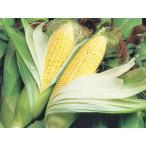 黄色いとうもろこし ゴールドラッシュ(Lサイズ)10本 北海道産 出荷時期:8〜9月