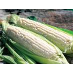白いとうもろこし (Lサイズ)×10本 北海道産 出荷時期:8〜9月(ピュアホワイト ホワイトショコラ)
