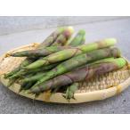 ヒメタケノコ 1kg (根曲がり竹) 北海道産 出荷時期:5〜6月