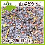 山ぶどう 4Kg(2kg×2箱)北海道産 ヤマブドウ 出荷時期:9〜10月