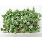 よもぎ(100g)×2パック 北海道産 出荷時期:5〜6月