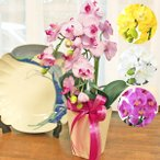 胡蝶蘭 造花 ギフト ミニ胡蝶蘭の手頃な大きさの鉢植え5本立 お祝い 就任祝い CT触媒