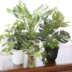 観葉植物 造花 インテリアグリーンポットアソート3個セット フェイクグリーン CT触媒