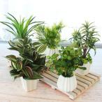 造花 インテリアグリーンミニポット5点アソートセット 観葉植物  配送日指定不可  CT触媒