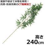 七夕 竹 笹竹 (バンブー) 超特大 240cm 造花 笹の葉 snb