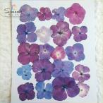 押し花素材 あじさい(ピンク&紫系)ミックス計20枚 (レジン、押し花額などハンドメイド・DIY素材としてピッタリです)
