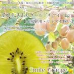 【送料無料♪11月上旬頃から発送】キウイ 愛媛産 訳ありゴールドキウイフルーツ5kg ご家庭用 サイズ不揃い