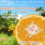 柑橘 - 伊予柑 訳あり宮内伊予柑 8kg 愛媛県産