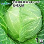 キャベツ 札幌大球 北海道 1玉 7-10kg 巨大キャベツ 野菜 ギフト 産地直送 ご当地グルメ Gift