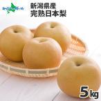 梨 果物 お取り寄せ 新潟県産 産地直送 新潟 完熟 日本 なし 5kg 果物 ギフト フルーツ Fruits Gift