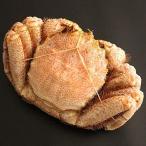 どさんこグルメマーケット 毛ガニ 特大 1.2kg メガサイズ 北海道産 ギフト 浜茹で ボイル 冷凍 解凍のみでOK カ?