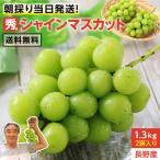 シャインマスカット 1.2kg 2房 秀品 送料無料 産地直送 長野県産 ぶどう 皮ごと食べられる 大人気ブドウ 上原園