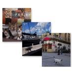 ネコ歩き キューバ/  フロリダ/  モロッコ マラケシュ(3枚組DVDセット)18842AA-18843AA-18844AA-NHK