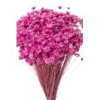 そらプリ ドライフラワー 花材 スターフラワー ミニ ストロベリー 小分け 約1/3〜1/4袋