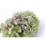 プリザーブドフラワー 花材 ソフトピラミッドアジサイ ヘッド ライムパープル 小分け 約4g