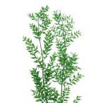 「即納」 プリザーブドフラワー 材料 ラスカス 「フレッシュグリーン 小分け 」 プリザーブドフラワー 花材 大地農園