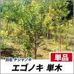 エゴノキ 単木 樹高2.0m前後 (根鉢含まず)