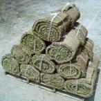 送料無料 姫高麗芝 (ヒメコウライシバ) 20ロール