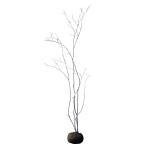 コハウチワカエデ 株立ち 樹高1.8〜2.0m前後 (根鉢含まず)
