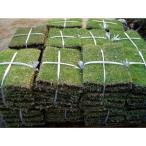 送料無料 高麗芝 (コウライシバ) 20束 グランドカバー ポピュラーな日本芝
