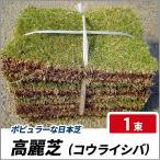 高麗芝 (コウライシバ) 1束 (25cm×35cmが10枚)