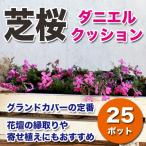 シバザクラ 芝桜 ダニエルクッション 濃いピンク 25ポットセット グランドカバー
