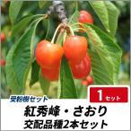サクランボ 紅秀峰・さおり 樹高80cm前後 交配品種2本セット