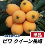 ビワ クィーン長崎 樹高30cm前後 単品 果樹