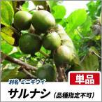 サルナシ (品種指定不可) 樹高80cm前後 単品 果樹