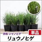 リュウノヒゲ 単品 グランドカバー 丈夫な常緑多年草
