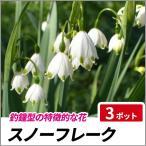 スノーフレーク 3ポットセット 多年草 球根 花壇 鈴蘭水仙