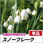 スノーフレーク 単品 多年草 球根 花壇 鈴蘭水仙