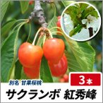 サクランボ 紅秀峰 (ベニシュウホウ) 樹高80cm前後 3本セット