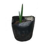 スノーフレーク 100ポットセット 送料無料 多年草 球根 花壇 鈴蘭水仙